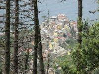 Corniglia through the trees