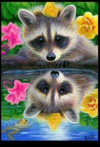 ~Raccoon~