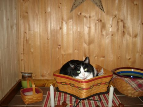 OREO IN A BASKET
