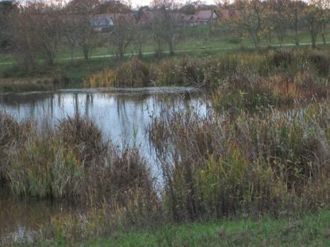 pond in late autumn