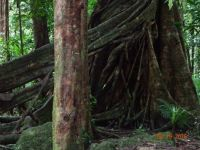 amazing root system