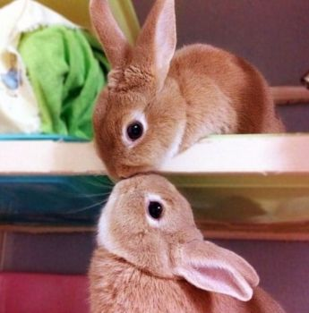 bunnies in love 1