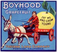 Boyhood Grapefruit