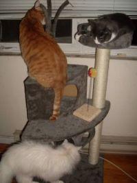Cat Tree- Crush, Smudge & Jack