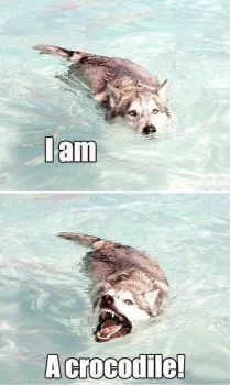 I'm a croc