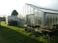 Clearing out the glasshouse