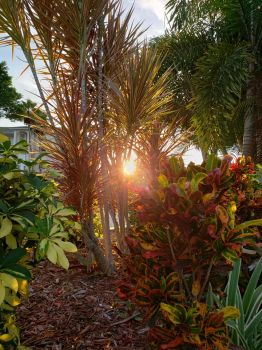 Sunset Through Bushes