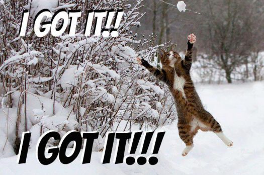 cat catching snowball