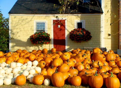 Pumpkins in New England