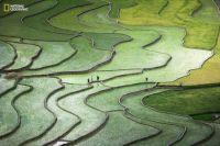 Terrace Paddies  in North Vietnam by Qu'nhAnh Nguyen