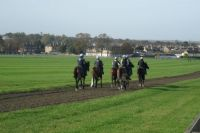"Newmarket UK ""the Gallops """
