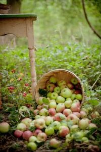 Heel veel appeltjes.