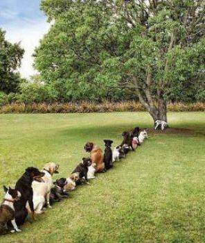 Dogs at tree
