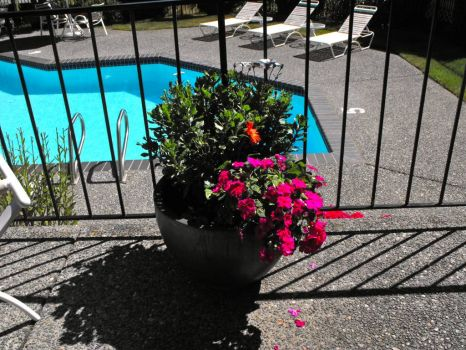 Pretty flower pot by the pool