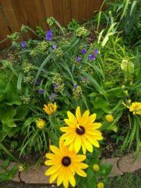 Helen's back flowerbed