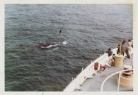 Whales off the bow