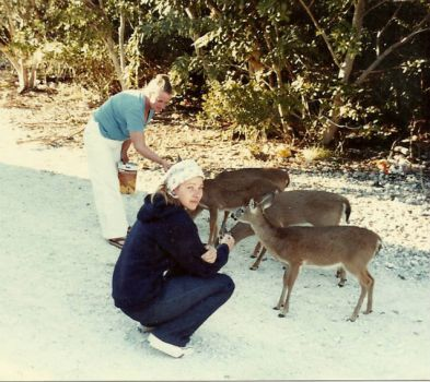 Key Deer ~ Big Pine Key, Florida  1970's