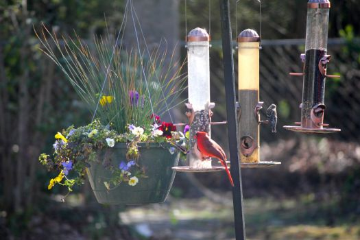 slow day at the feeders