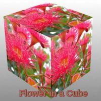 Flower in a Cube