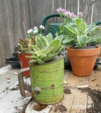 Succulents in an old flour sifter.