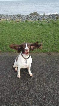 Those ears
