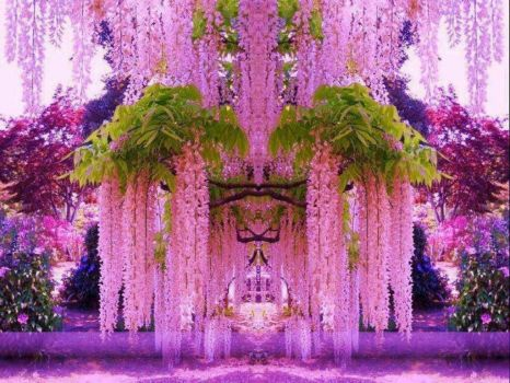 Purple Wisteria in Japan