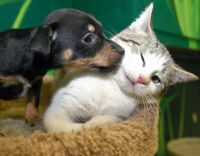 pup and kitten