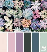SucculentHues1_150
