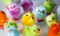 Fuzzy Little Easter Chicks