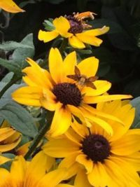 Blossom and visitor--medium