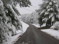 Snowy lane in Virginia