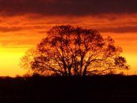 Golden Sunset over Somerset