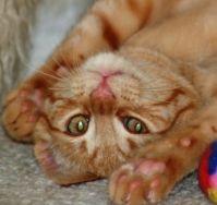 Kitten Papaya - 2012