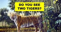There Are Actually 2 Tigers In This Image - Can You Find The Hidden Tiger?
