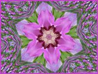 Kaleido - ibišek...  Kaleido - hibiscus ...