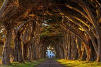 Cypress Tree Tunnel at the Historic Marconi Wireless Station, California-Michael Brandt