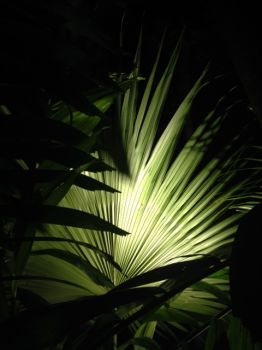 Palm frond at night