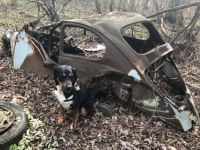 """Milli (the """"BUG"""" Finding Pooch)"""