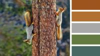 Squirrels on a Tree Trunk