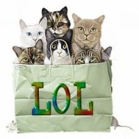 cats in a bag