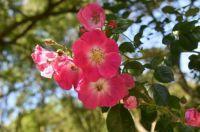 flowerspinkcolor