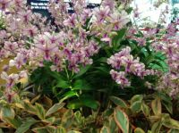 Orchids - Changi Airport, Singapore