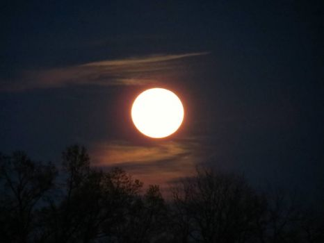 """Full Pink Moon"" Last Night"