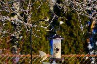 Birds in winter, at the feeder