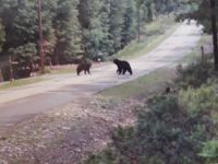The Bear visitors on their way to the water hole down in the valley