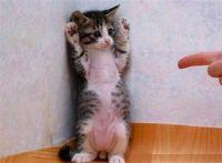 Okay, give me all your fur!