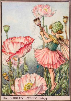 The Shirley Poppy Fairy (smaller size)