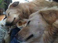 Sleeping Beauties!