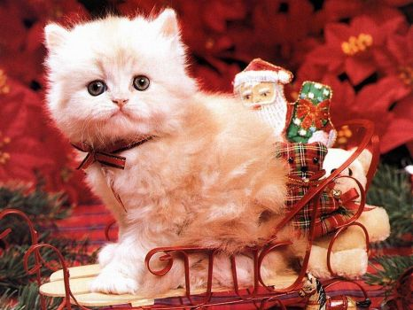 Christmas - Sleigh Kitten