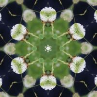 kaleidoscope 74 like snowballs small